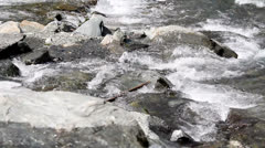 Mountain river flow over strong stones, up view Stock Footage