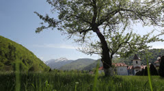 One green tree and monastery in background, spring mountain village Stock Footage