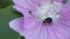 Bee landing on a bug Stock Footage