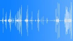 crickets 005 - sound effect