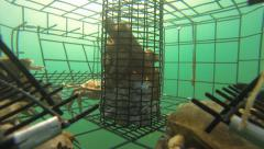 Crab pot being pulled in. Stock Footage