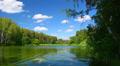 Forest lake landscape. Footage