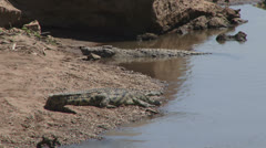 nile crocodile resting alongside a hippo - stock footage