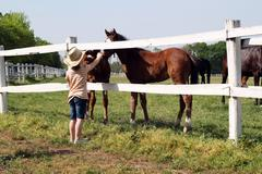 Child with foals on farm Stock Photos