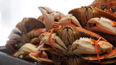 Cooked dungeness crabs Stock Footage