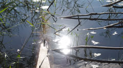Sun glares in water Stock Footage