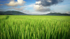 Landscape of beautiful green field. Time lapse Stock Footage