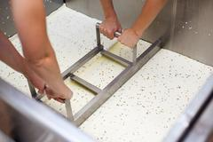 extracting curd of a vat-machine in a cheesemaker - stock photo