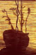 shadow of a  potted plant - stock photo