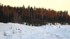 Forest in the evening in winter, last sun rays Stock Footage
