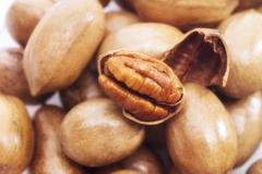 Pecan nuts, close-up - stock photo