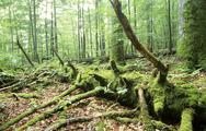 Stock Photo of Germany, Bavarian forest, National park