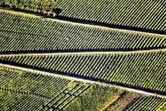Germany, winegrowing near Mosel river Stock Photos