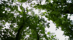 Scenic View of Giant Trees Stock Footage