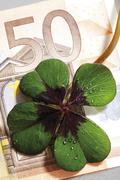 Four-leafed clover on 50 Euro banknote, close-up, elevated view Stock Photos