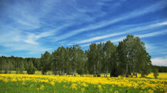 Summer landscape with green field, yellow flowers, clouds and sky, time-lapse. - stock footage