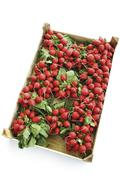 Radishes in wooden box  (Flamboyant Sabina) elevated view Stock Photos
