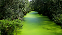 Green Jungle River Stock Footage