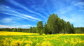 Summer landscape with green field, yellow flowers, clouds and sky, time-lapse. Footage