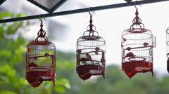 Mata Puteh (Zosterops palpebrosa) bird Stock Footage