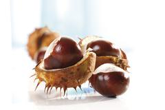 Horse Chestnuts (Aesculus hippocastanum), close-up - stock photo