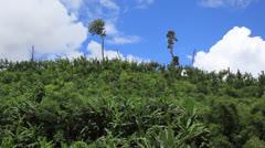Laos Burma Myanmar Golden Triangle Mekong River DEFORESTATION Stock Footage