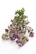 Wild Marjoram (Origanum vulgare) - stock photo