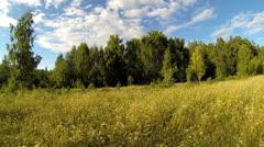 Summer grass Stock Footage
