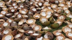Coconuts Husk Split Open Sun Dry Meat - stock footage