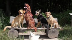 Four dogs sitting on a bench Stock Footage