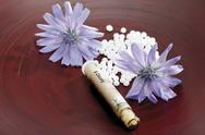 Stock Photo of Tube with Bach Flower Stock Remedy, Chicory (Cichorium intybus)