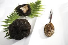 Black Truffles and truffle pesto on spoon, elevated view Stock Photos