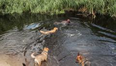 Dogs playing in the water Stock Footage