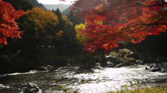 Japanese Maple Trees over River in Autumn in Japan Stock Footage