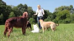 Dog trainer teaching dogs Stock Footage