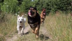 dogs running a way - stock footage