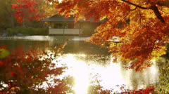 Japanese Maple over Pond in Autumn in Japan Stock Footage