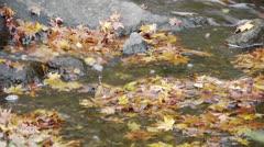 Autumn Stream in Japan Stock Footage
