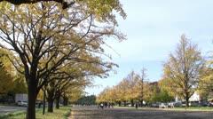 People walking through Yellow Ginkgo Tree in Japan Time Lapse Stock Footage