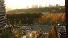 Busy Intersection with Yellow Ginkgo Tree in Japan Time Lapse Stock Footage