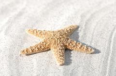 Seafish on sand, close-up Stock Photos