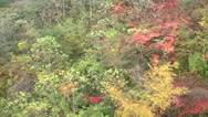 Stock Video Footage of Japanese Maple Trees Ropeway View in Autumn in Japan