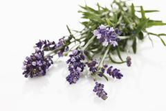 Bunch of lavender (Lavandula angustifolia), elevated view - stock photo