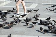 Stock Photo of Italy, Venice, Markusplatz, A person and lots of pigeons