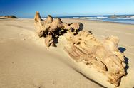 Large Driftwood Stock Photos