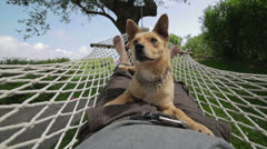 Man and dog relaxing on the hammock. Stock Footage