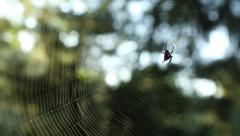 Spider In It's Web Stock Footage