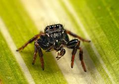 jumping spider and ant - stock photo