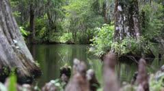 Tree Stumps Alongside Pond Stock Footage