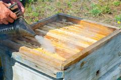 beekeeper at work - stock photo